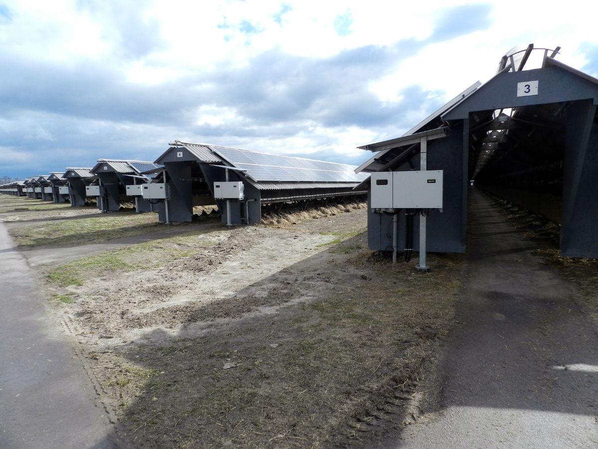 Не только норковая ферма, но еще и мощная солнечная электростанция