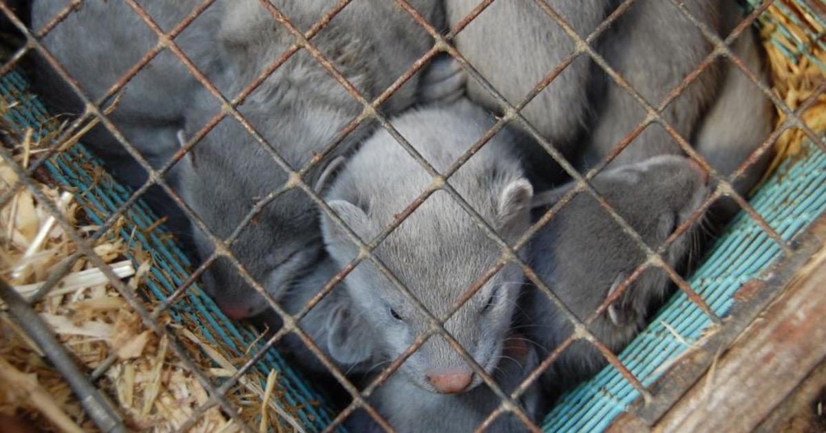 В Украине могут уничтожить меховую отрасль