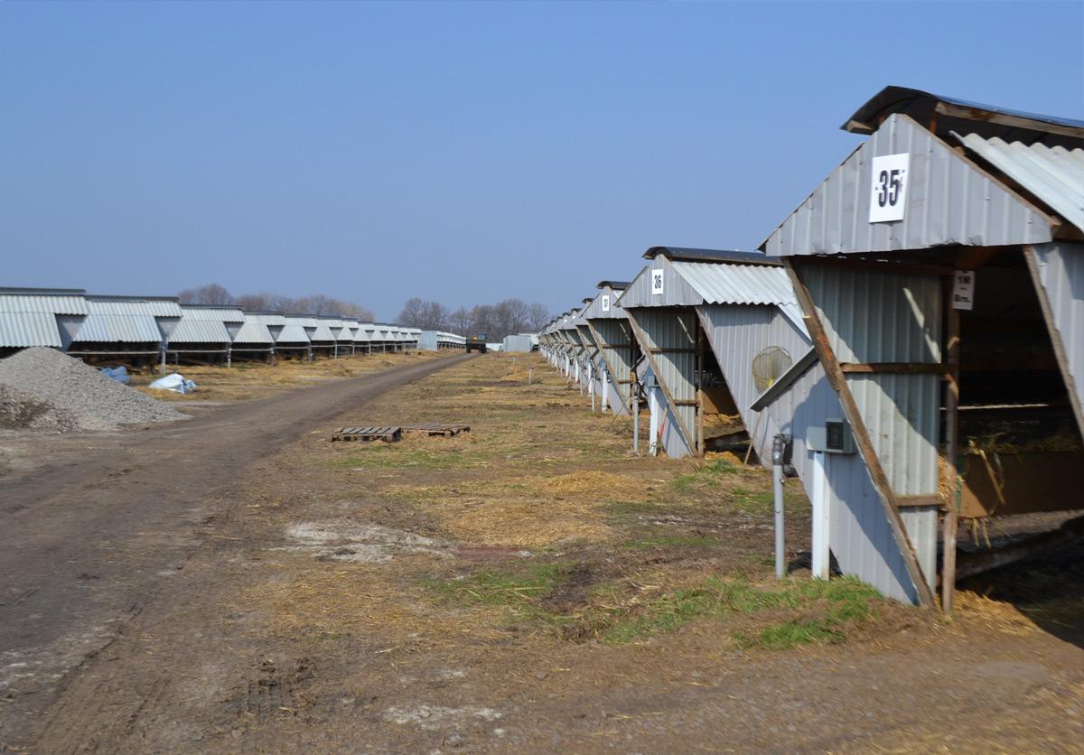 Норковая ферма Тиволи