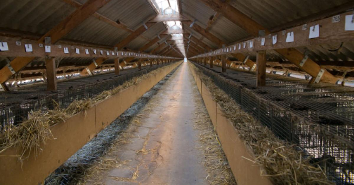 Инвесторы готовы вложить $500 млн в украинские норковые фермы