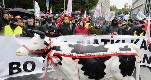 Польские фермеры протестуют против запланированного закона о запрете норковых ферм