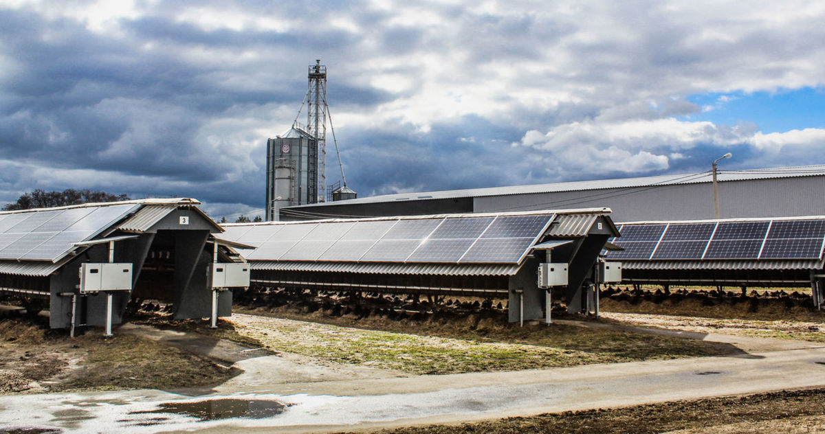 ФОТО: шеды накрыты солнечными панелями на ферме «PELSCOM»