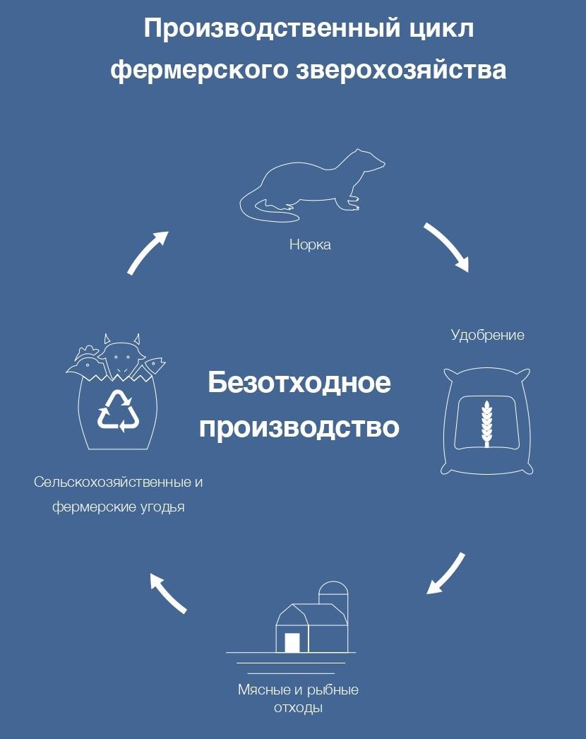 Производственный цикл норкового зверохозяйства