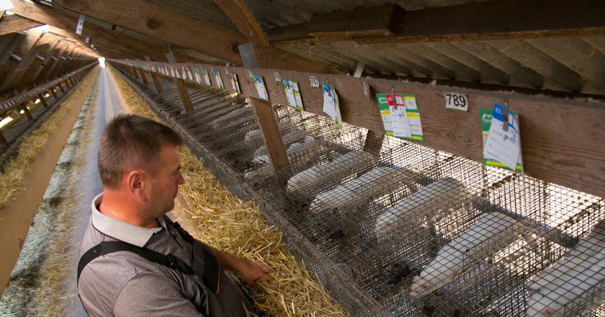 Благополучие сельскохозяйственных животных