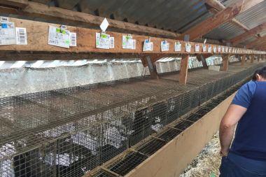 Норковая ферма Агропроминвест