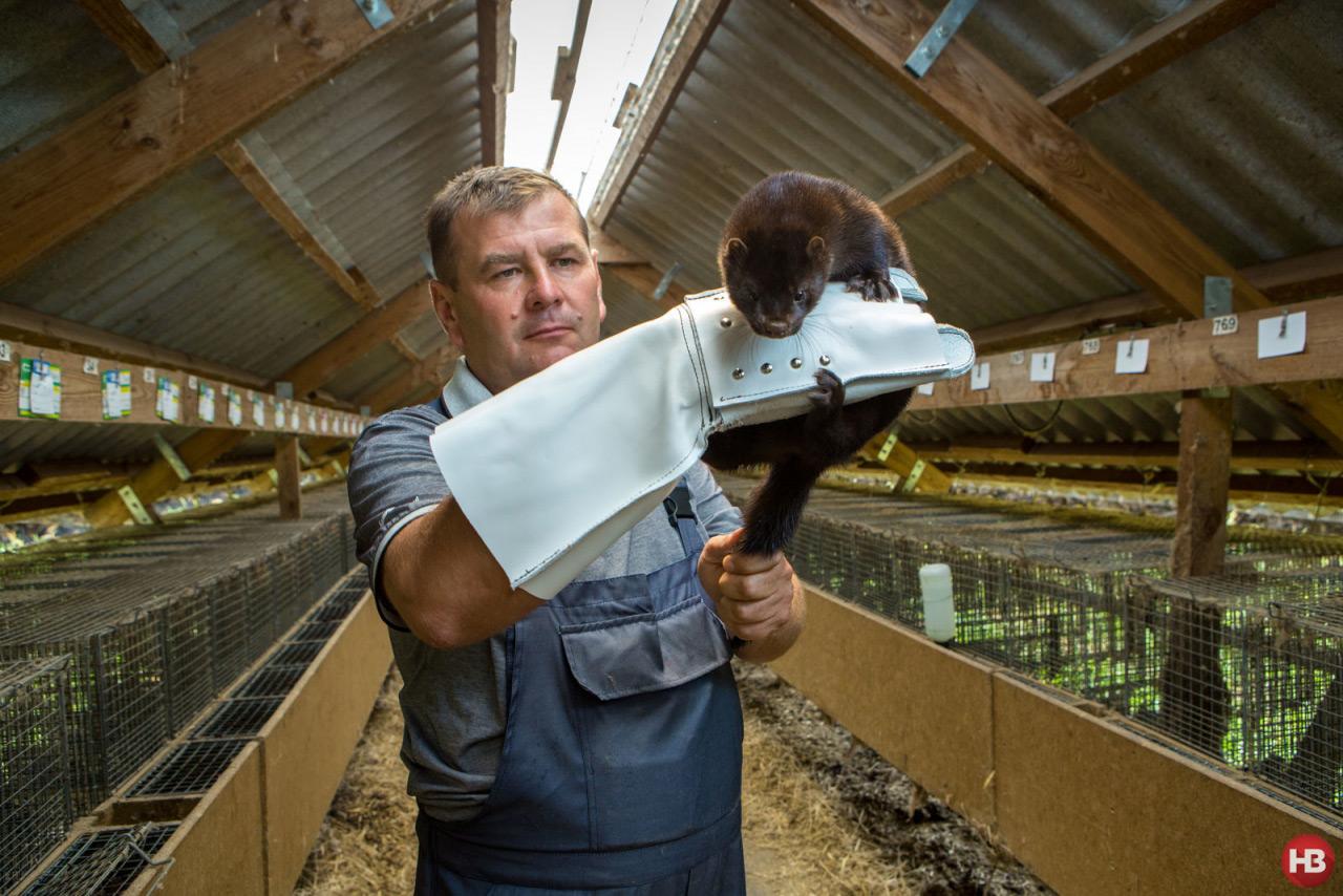В руках зоотехнолога Юрия Галенко самка норки
