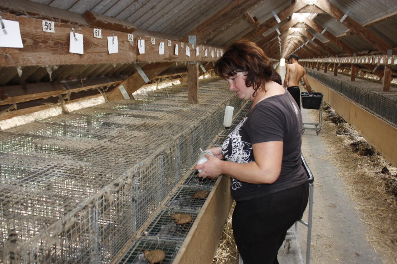 Работа по очистке панелей никак не мешает ни рабочим фермы, ни животным