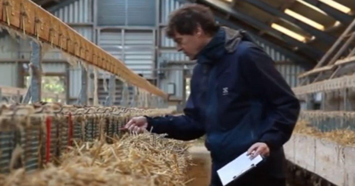 Охрана животных на европейских норковых фермах
