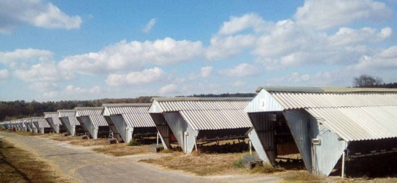 Старейшая норковая ферма Украины получила европейский сертификат WelFur