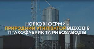 Норкові ферми утилізують близько п'ятдесяти тон відходів тваринництва