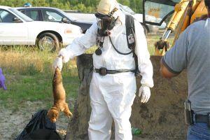 ПЕТА вбиває тварин
