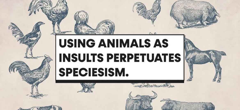 PETA висміює в соціальних мережах образи: поняття «свиня», «курка» заподіює біль тваринам